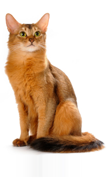 Is Your Cat's Grooming Normal?